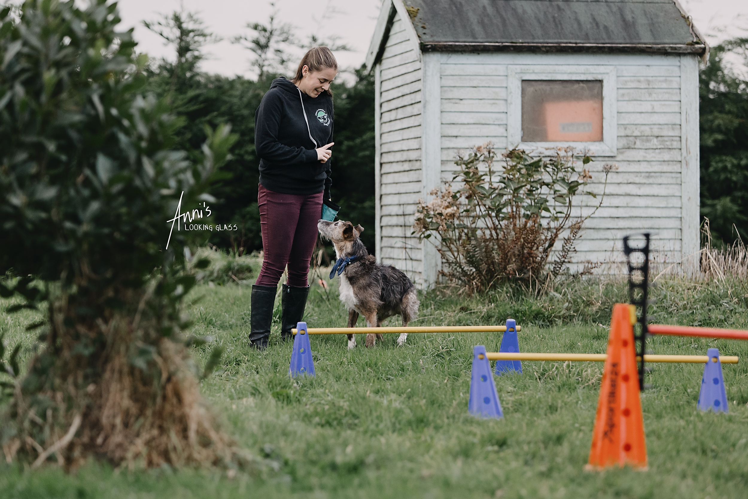 A young woman tells her greyhound to sit with a dog agility parcours in the foreground