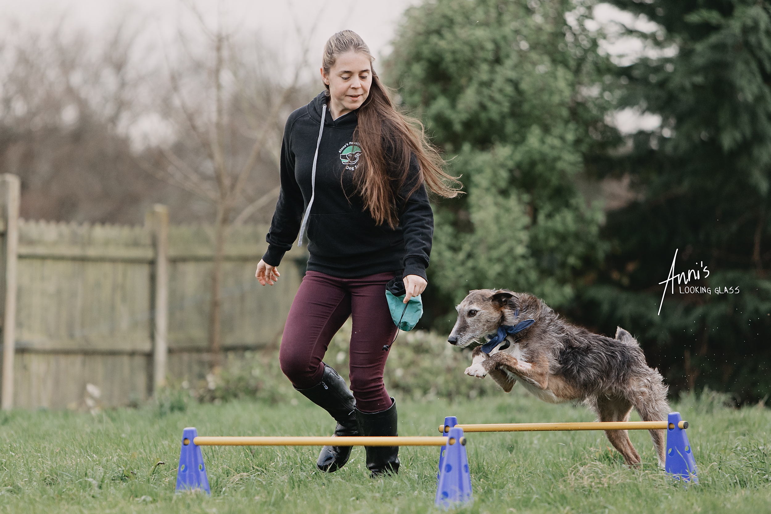 A young woman wearing a sweater branded with Alena's Pawsitive Dog School guides a greyhound across agility jumps
