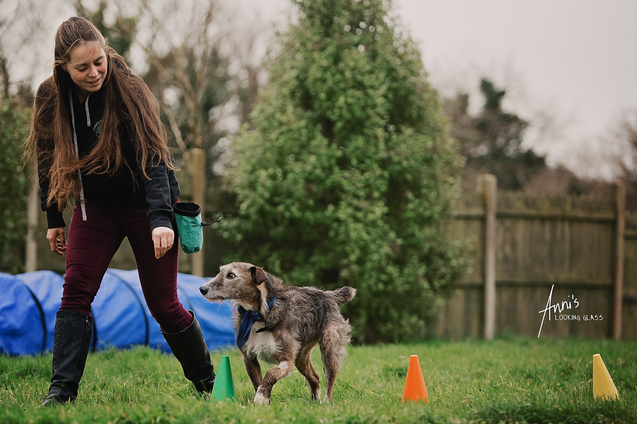 A young woman wearing a sweater branded with Alena's Pawsitive Dog School guides a greyhound through an agility course