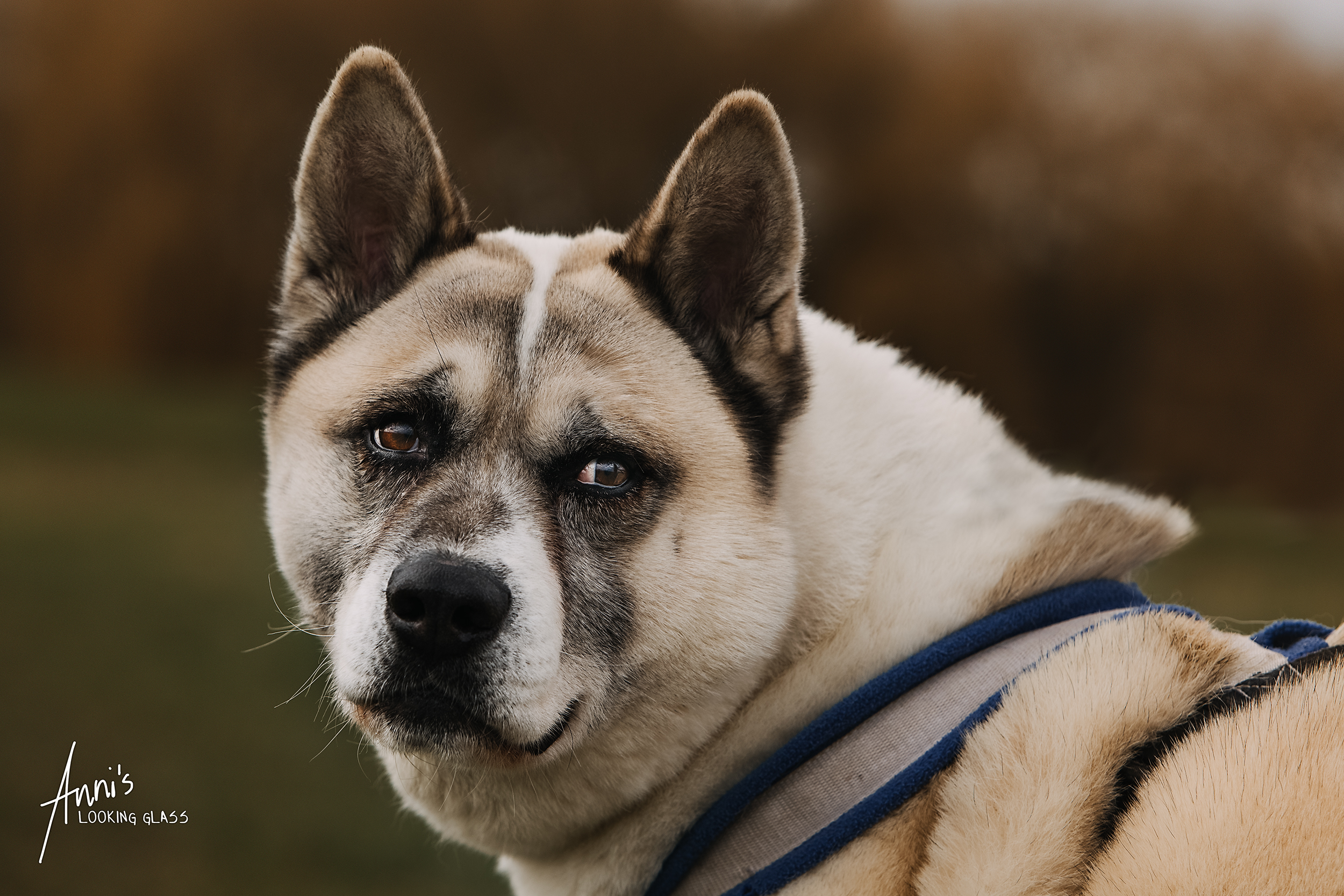 Loughborough dog photographer | A rescue dog from College Garth Kennels near Hathern | 6th March 2018
