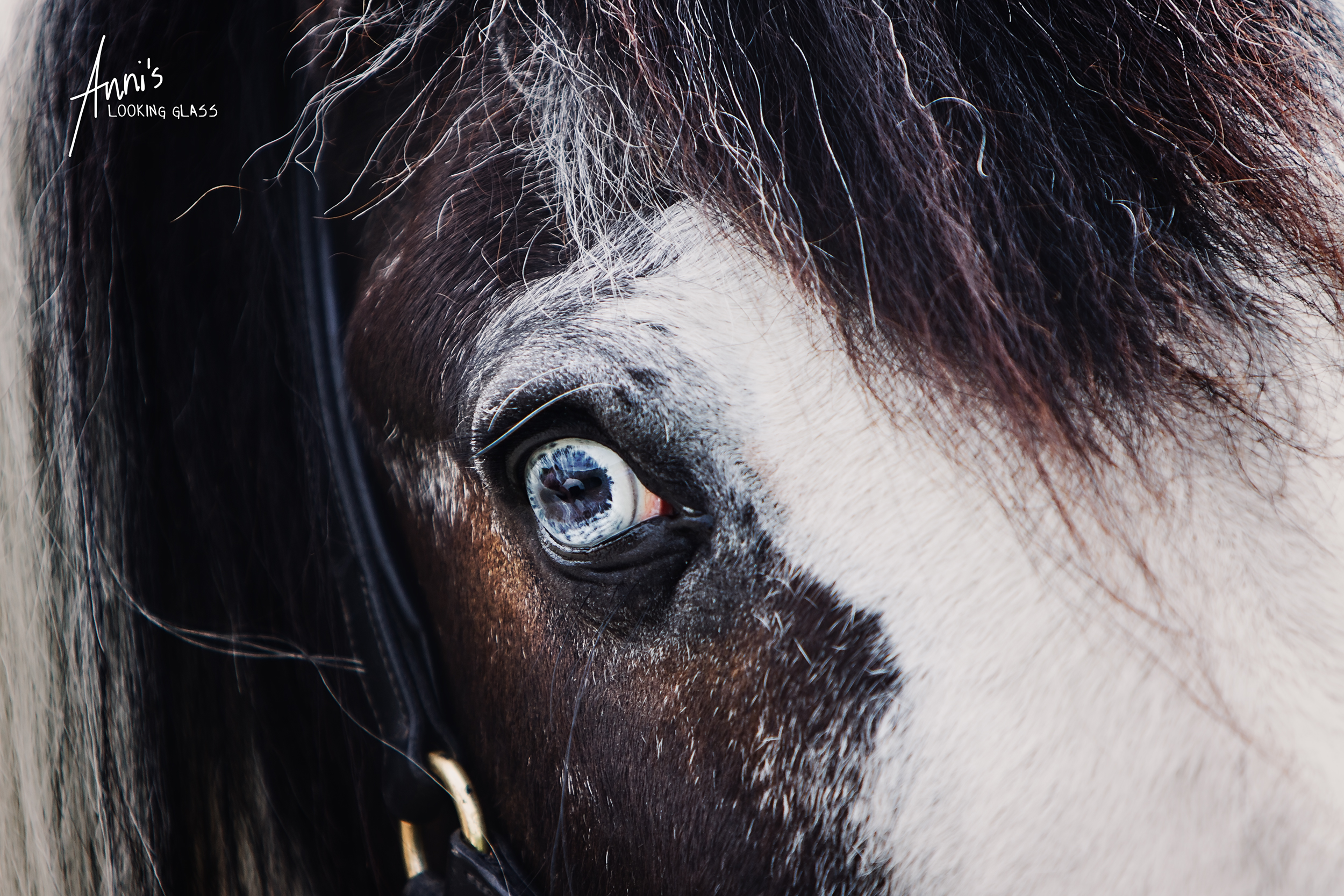 Bradgate Park, Newton Linford, Leicestershire: Close up photograph of a blue horse eye. 2nd July, 2017
