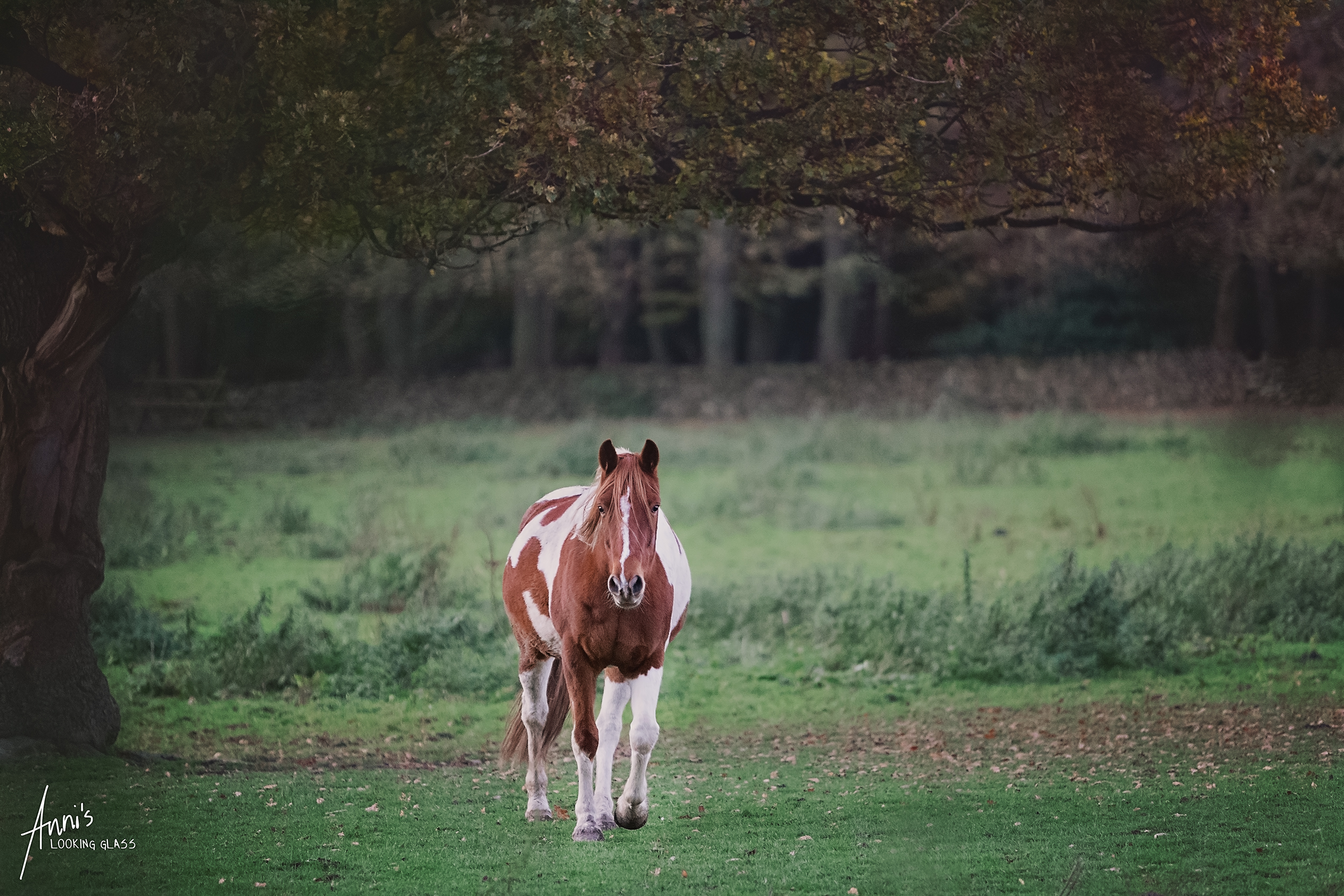 equine-photography-leicestershire-01.jpg