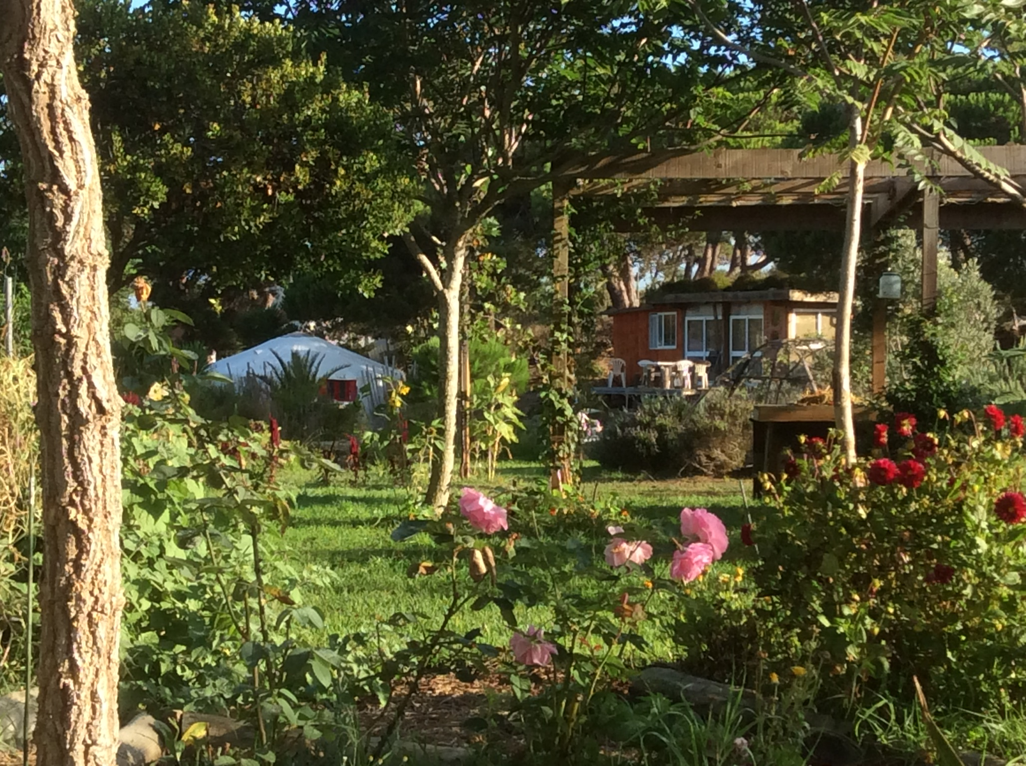 View through the rose garden