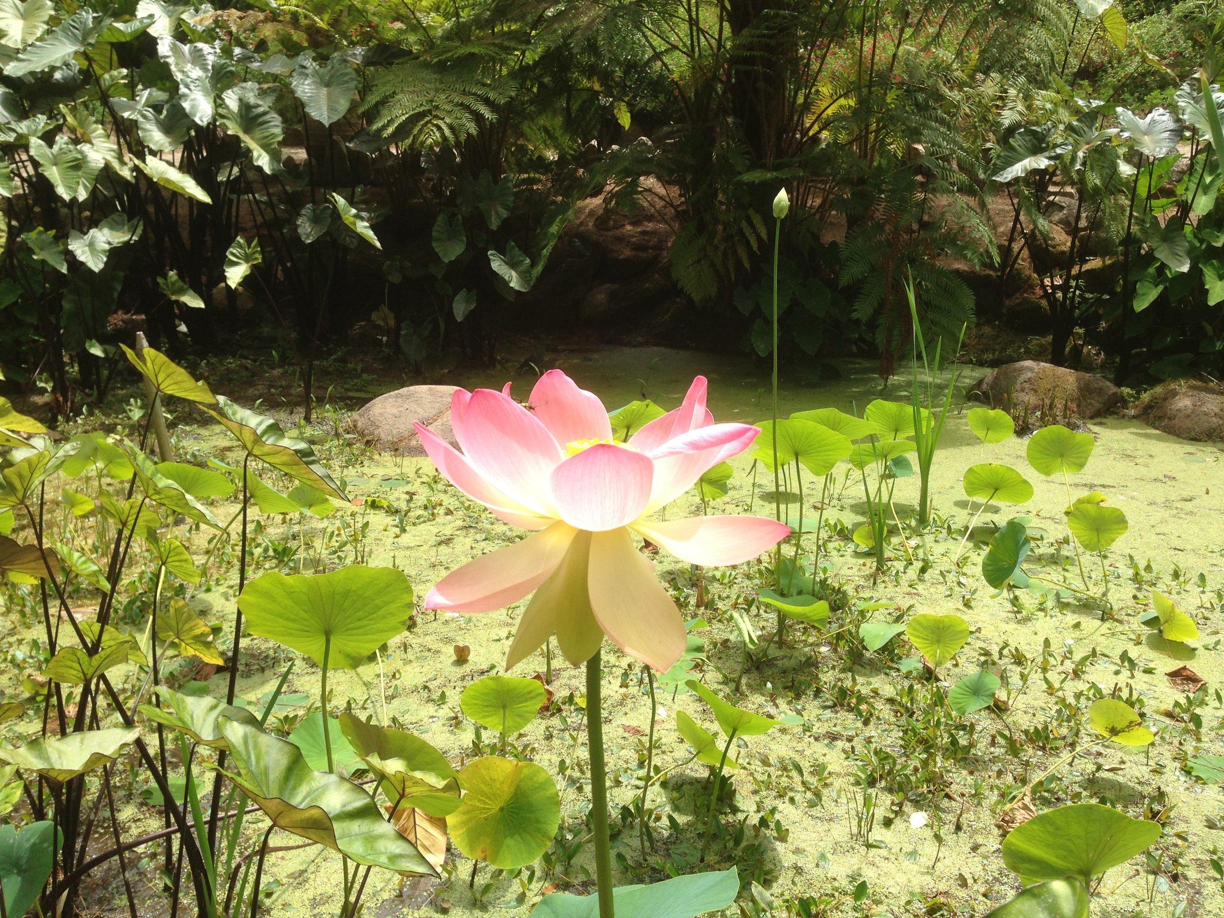 Monserrat Botanical Garden