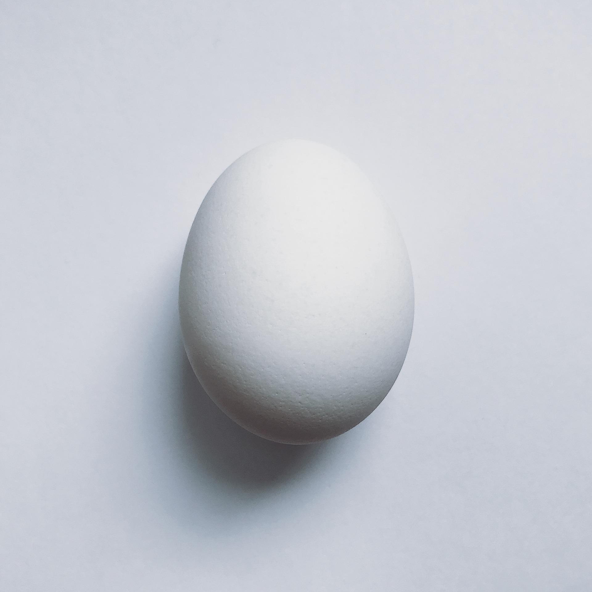 egg-2052398_1920.jpg