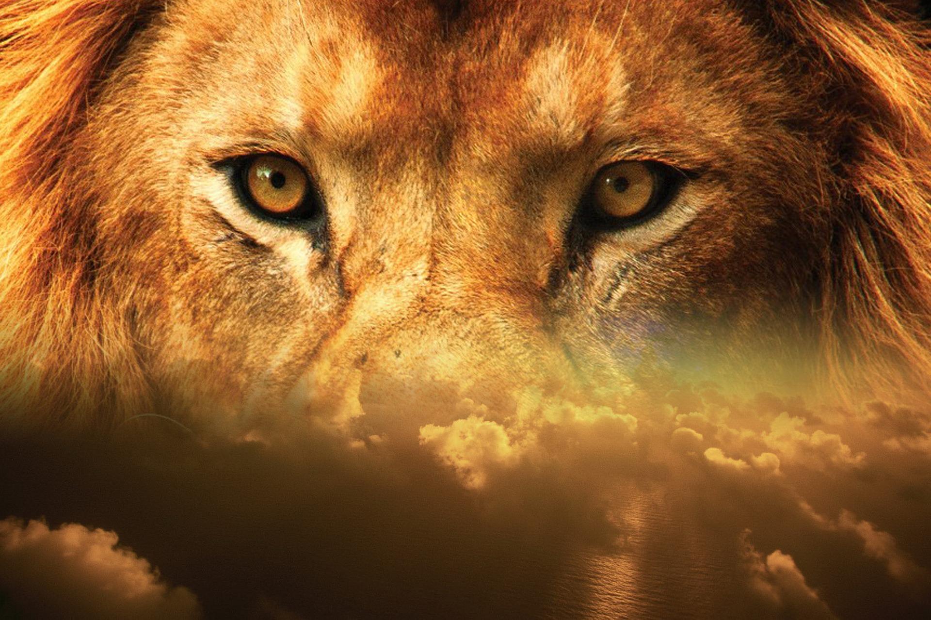 lion-2115592_1920.jpg
