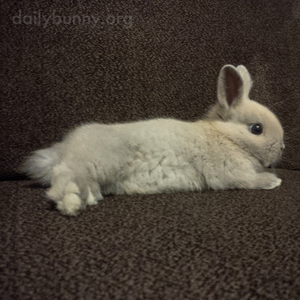 Baby Bunny Relaxes on and Explores the Sofa 1