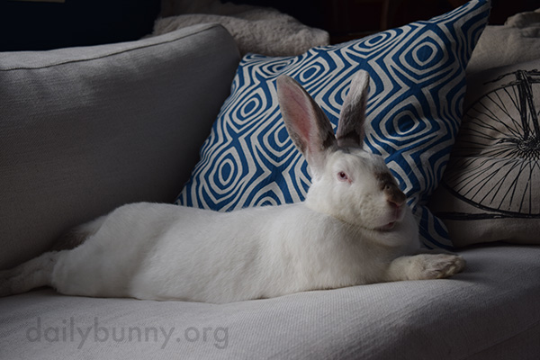 Bunny Lounges Where the Humans Lounge