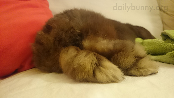 Just Look at These Fluffy Feetsies