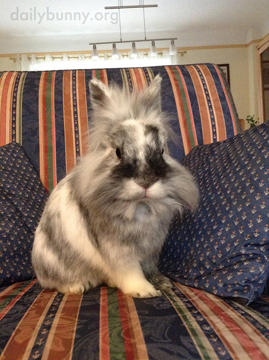 Bunny Claims This Chair as His Own