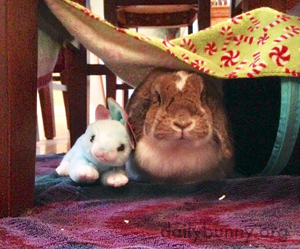 Bunny Hangs Out in Her Fort with a Friend