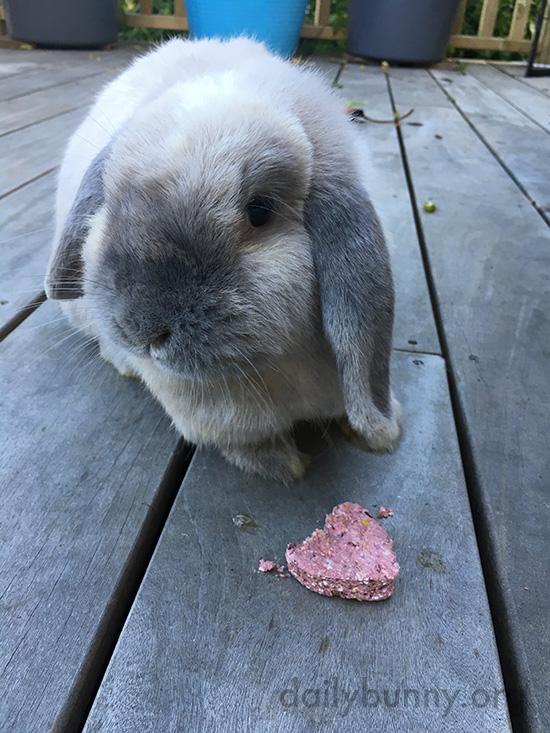 Bunny Nibbles a Special Treat