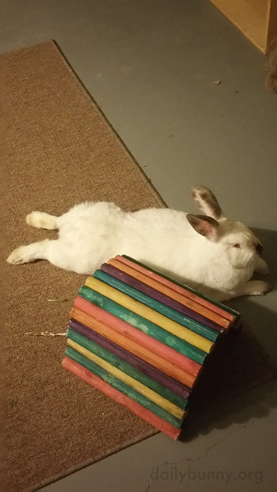 Bunny Relaxes Next to Her Tunnel 1