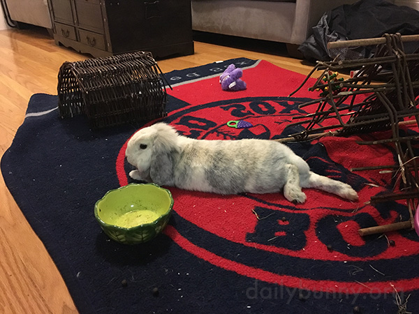 Bunny Relaxes with a Full Belly