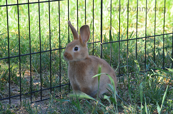 Bunny Sits and Reflects