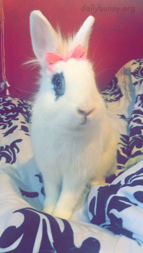 Bunny, You Look So Pretty with This Bow in Your Fur! 1