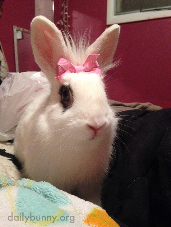 Bunny, You Look So Pretty with This Bow in Your Fur! 2
