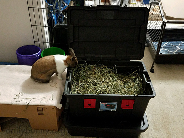 Bunny's Found the Motherlode