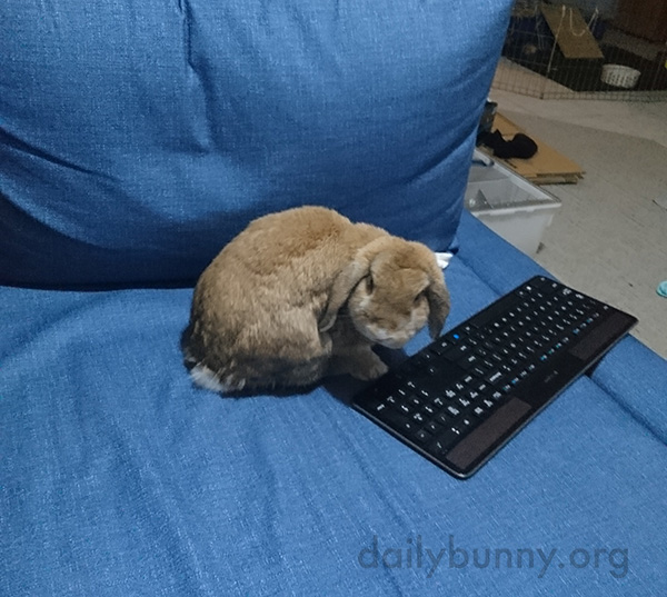 What Is It, Human? Can't You See I'm Busy Here?