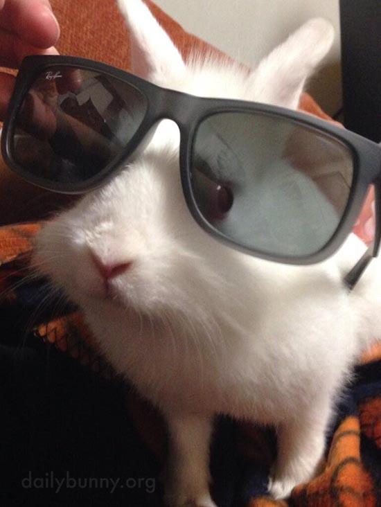Looking Sharp, Bunny!
