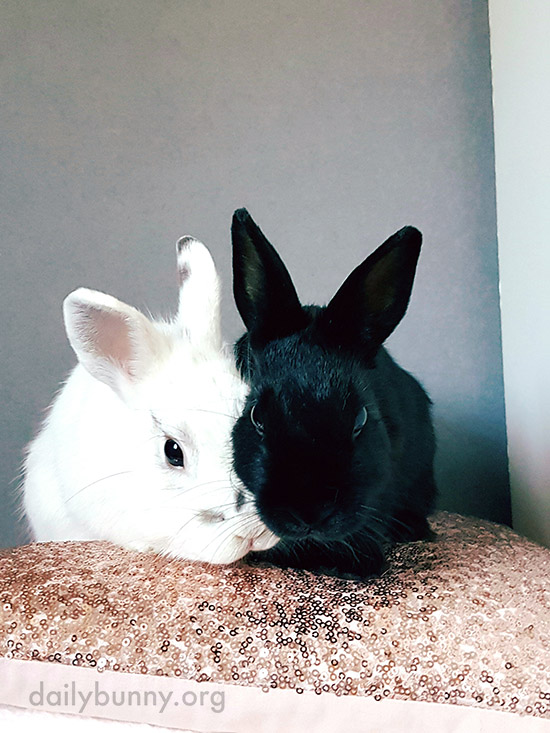Bunny Nuzzles His Friend