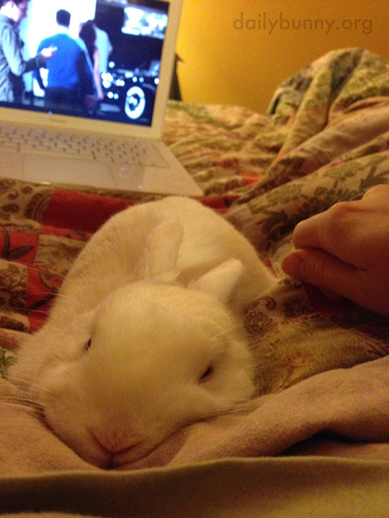 Bunny Gets Cozy with Human