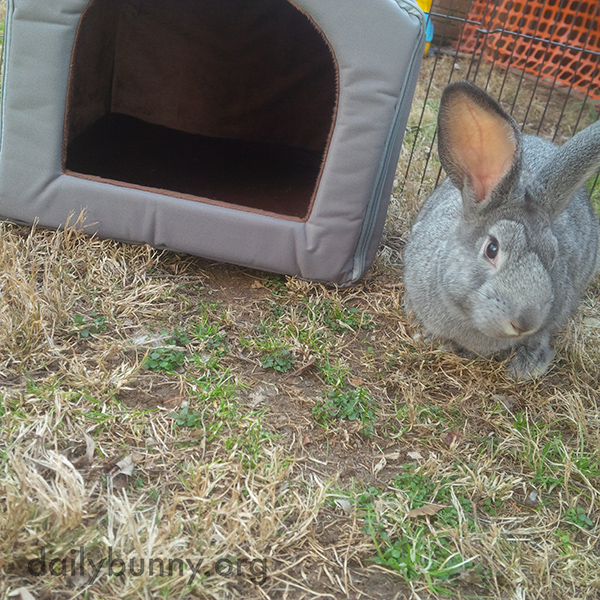 This Is My Little Hut. Sorry, But It's Too Small for You, Human.