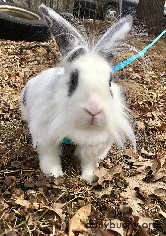 Bunny Can Explore All These New Outdoor Textures