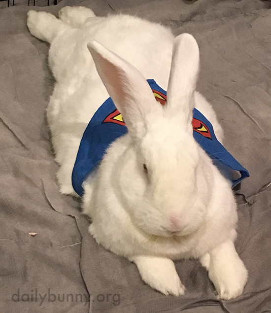 Superbunny Takes a Break from Fighting Crime 2