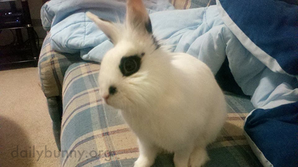 Isn't There a Show About Bunnies We Could Watch, Human?