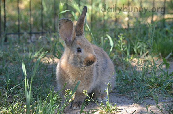 Bunny Surveys All That Romping Space