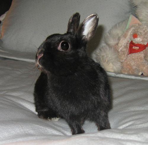 2008, 7-21 Daily Bunny