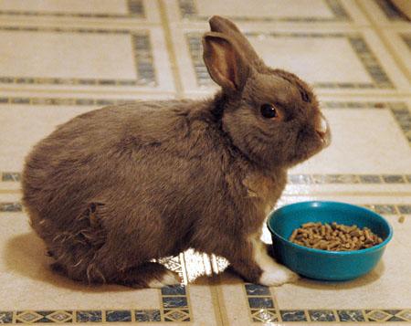 2008, 7-27 Daily Bunny