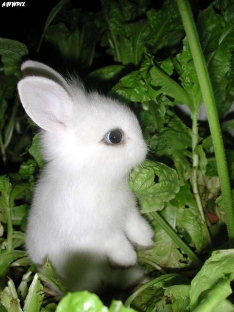 2008, 8-3 Daily Bunny