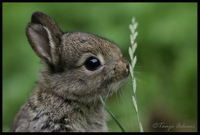 2008, 8-9 Daily Bunny