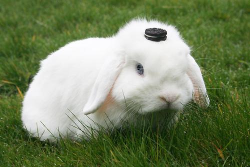2008, 8-10 Daily Bunny