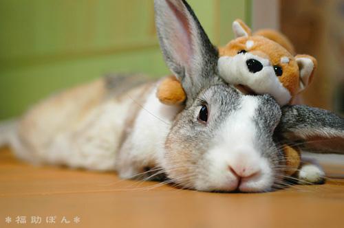2008, 8-12 Daily Bunny
