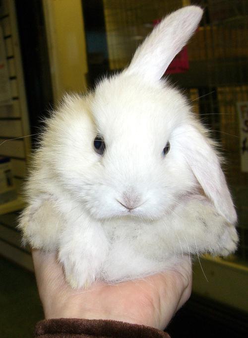 2008, 8-24 Daily Bunny