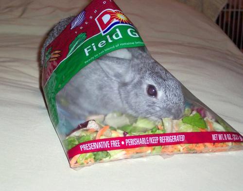 2008, 8-26 Daily Bunny.2