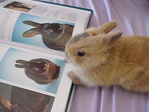 2008, 8-27 Daily Bunny