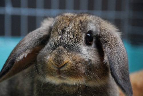 2008, 9-4 Daily Bunny