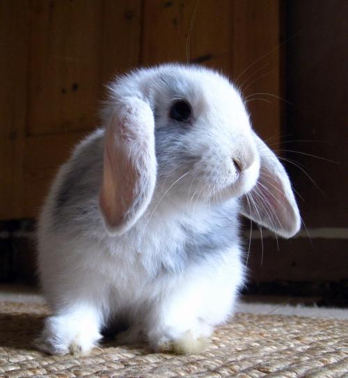 2008, 9-22 Daily Bunny