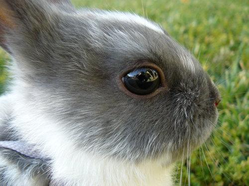 2008, 9-26 Daily Bunny
