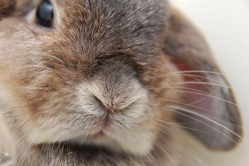 2008, 10-6 Daily Bunny