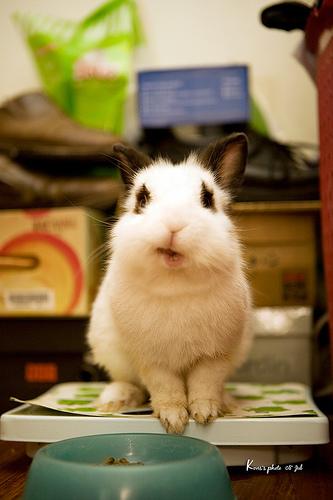 2008, 10-1 Daily Bunny