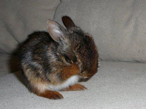 2008, 10-15 Daily Bunny