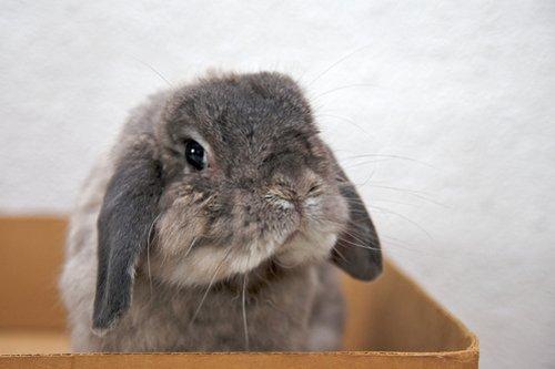 2008, 10-21 Daily Bunny
