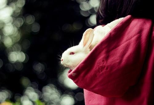 2008, 10-24 Daily Bunny