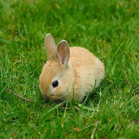 2008, 11-3 Daily Bunny.2