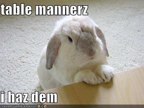 2008, 11-17 Daily Bunny
